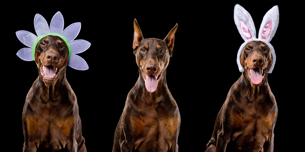 Easter Red Doberman Dog
