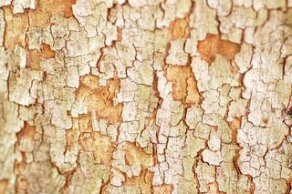 tree bark texture   by Abby Lanes