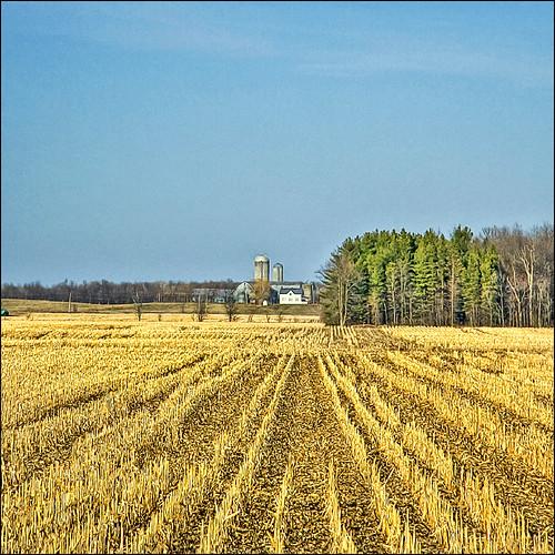 ontario canada field farmhouse spring corn farm bluesky silo rows crop vernon digitalcameraclub mywinners abigfave platinumphoto aplusphoto viamoi 100commentgroup