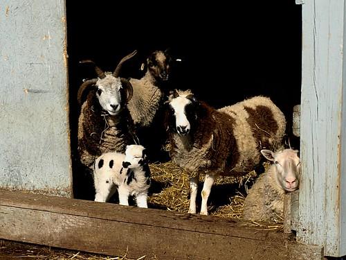 Farmpark Family | by Ride Local Dream Global - Mike Mekinda