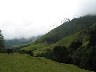 Cocora valley, Coffee Area, Colombia 08 | by Ben Bowes