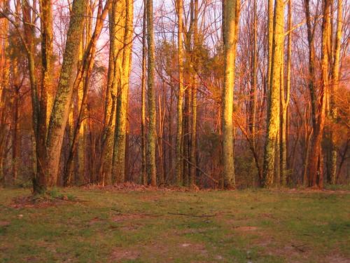 sunset lebanon tree virginia