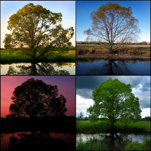 blue trees sunset sky reflection tree green nature water clouds landscape four pond seasons mosaic seasonal willow quarters willowtree blackwillow