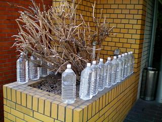 Wasserflaschen gegen die Hitze der Stadt (macht 1-2 Grad kühler) | by heartbeaz