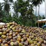 Koh Samui Coconuts charcoal factory @Maenam コサムイ-椰子炭工場0010