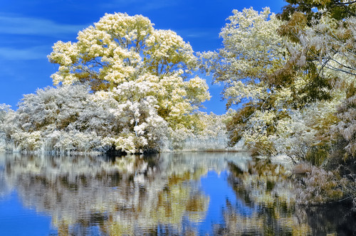 ir nikon texas d70 28mm d70s houston nik colorir armandbayou platinumheartaward cnx2 mirrorser goldieir