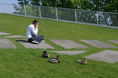 ducks on TU Delft library roof