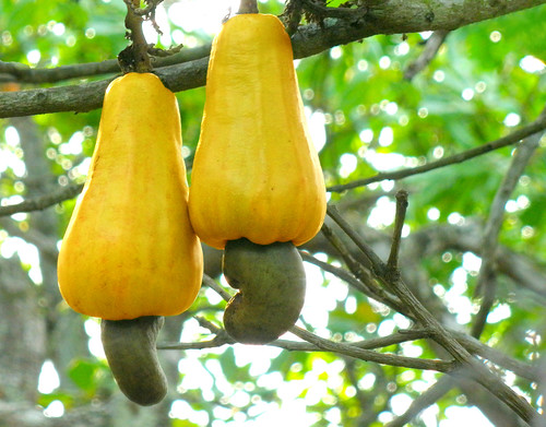Twin Cashews | by Abhishek Jacob