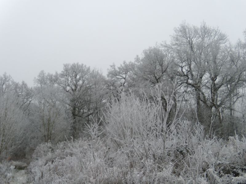 Frosty trees Wanborough to Godalming