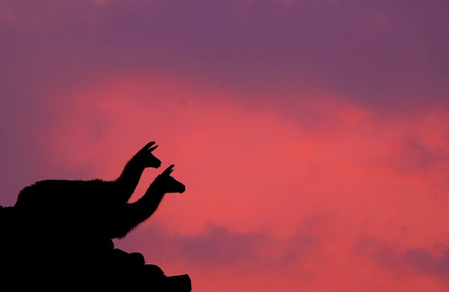 city travel sunset sky orange sun mountain mountains love peru southamerica nature silhouette rock inca stone cuzco clouds america landscape ruins purple cusco llama silhouettes andes machupicchu archeology incatrail valentine'sday lostcityoftheincas mywinners abigfave goldstaraward peruvianimages keesstraver