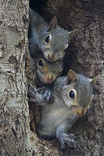 tree northcarolina soe waxhawnc anawesomeshot canecreekpark theunforgettablepictures vosplusbellesphotos ghholt squerels