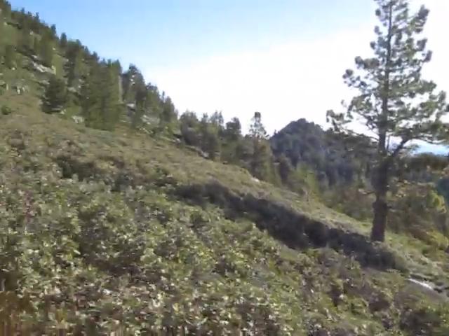 238_Tamarack-Valley-old-trail-overgrown