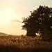 Summer Field by gblaxos