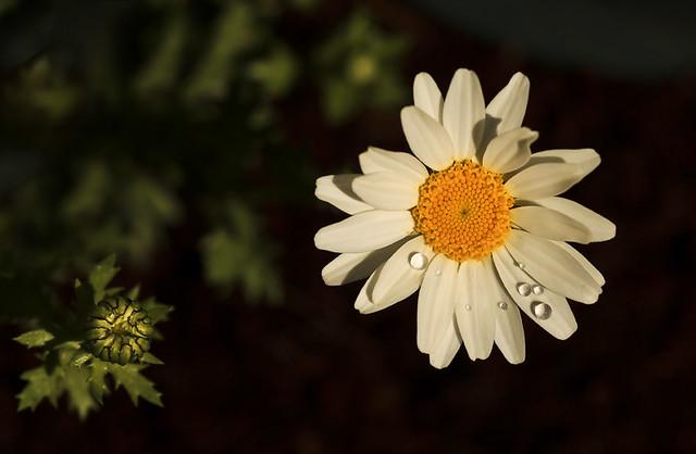 Flower & Bud - 73 of 215