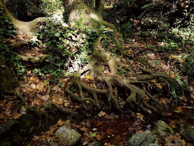Arrels a manera de peus /Roots as their feet