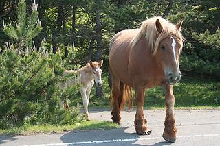 """Wild, Wild Horses"" - Careful-Crossing"