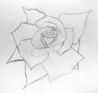 doodle week: roses