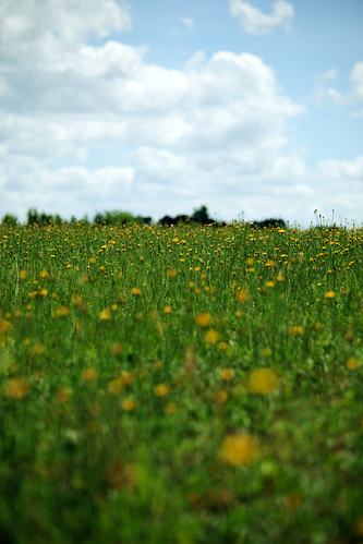 sky macro green field yellow clouds canon happy weeds bright wide sunny dandelion pasture 70200mm isusm eos5dmarkii