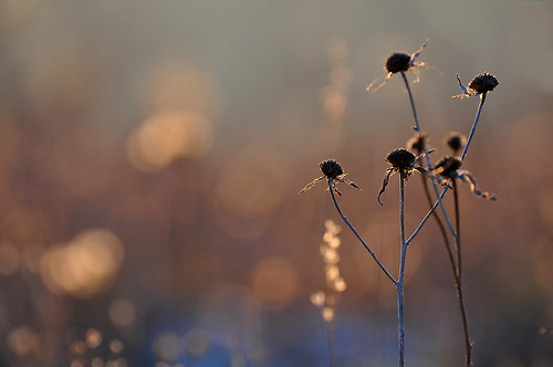 blue winter light sunset italy brown color colors yellow backlight season grey weeds nikon bokeh bologna sunsetlight emiliaromagna sunsetcolors golfd montecalvo nikond5000