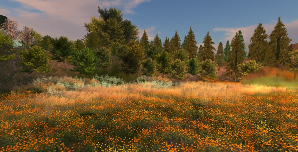 Champ Des Fleurs A Stunning Place Of Beauty At Forest Feas Flickr