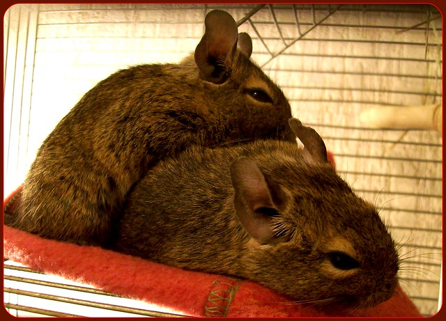 DEGUS-FRIENDSHIP