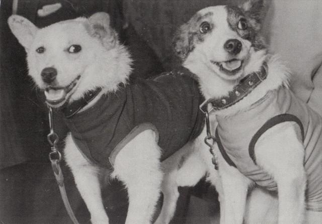 Belka & Strelka Soviet Space Dogs Postcard