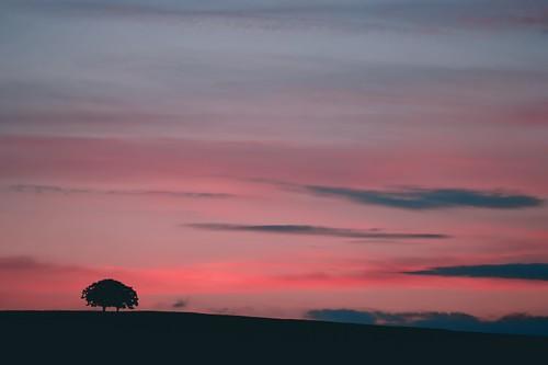 pink sunrise scotland ringexcellence