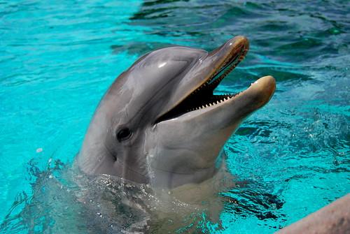 Dolphin @ Sea World | by micaelacampagna