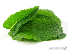 mint leaves   by SummerTomato