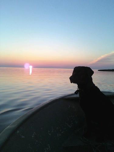sunset labs waterbirds labradors onancock