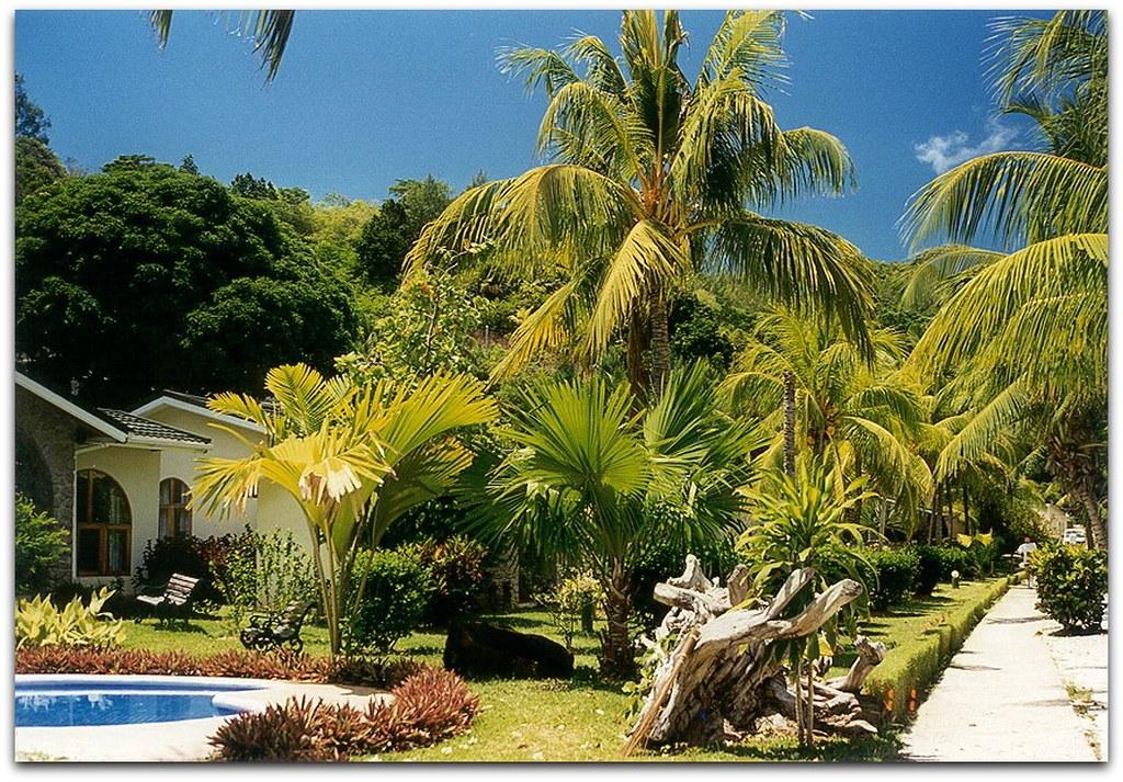 Tropic Garden Seychellois Flickr