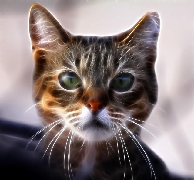Cat portrait with fractalius