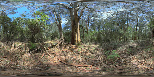 Sherbrooke_Forest: Off Neumann Track Sherbrooke Forest Vic Equirectangular | by Peter Gawthrop