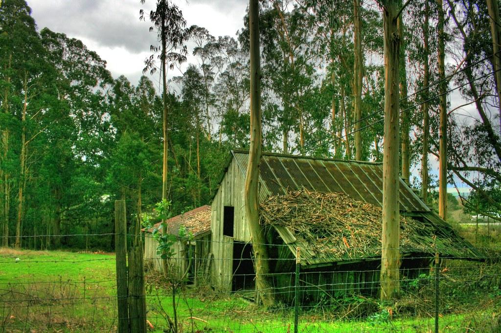 My Woodland Hideaway...