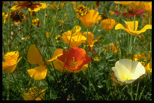 Wildflowers, 1994 | by Seattle Municipal Archives