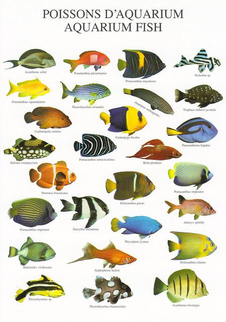 Nouvelles Images Aquarium Fish Postcard