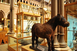 Oxford University Museum of Natural History | by goingslowly