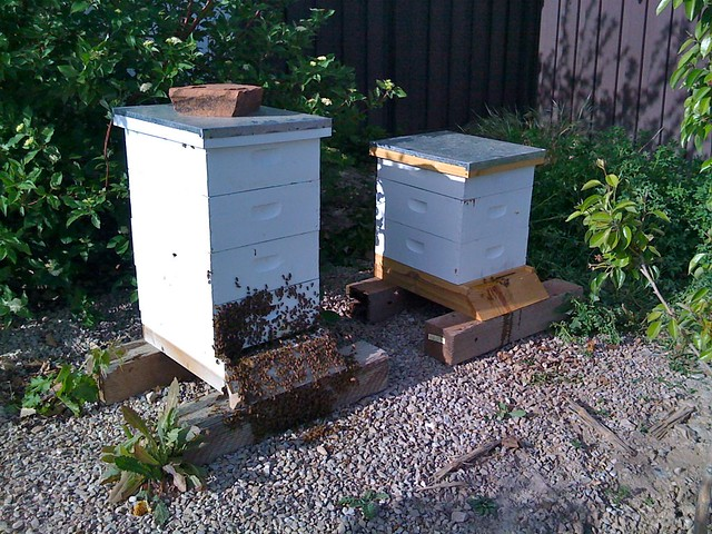 Hives after inspection.  The bees are out because I pushed them out taking the hive apart.