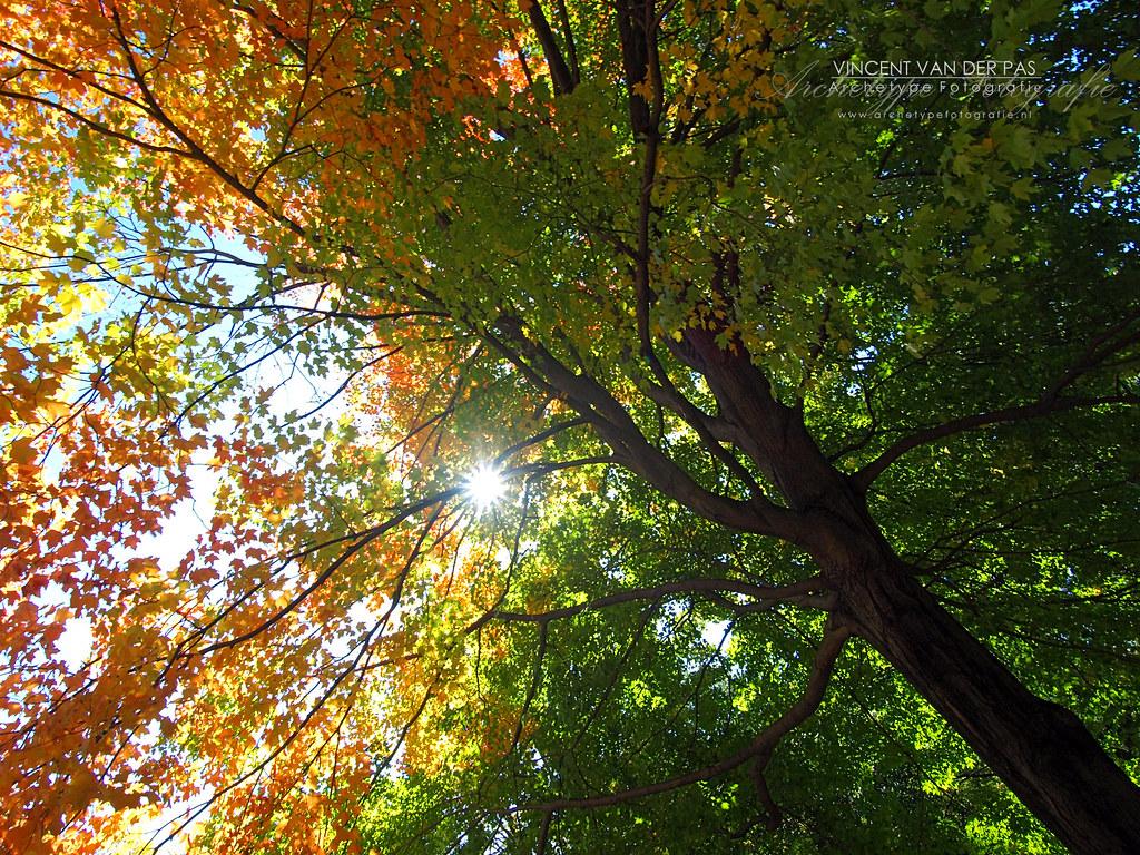 NYC Central Park Canopy by Vincent_AF