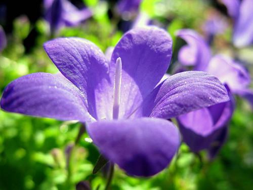 morning weekend amor explore mygarden purpleflower