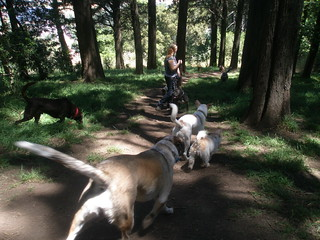 We spent some of our hiking time walking on the steep, shady trails on the hillside in Strawberry Canyon. | by Doggy Lama Pet Care