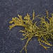 seaweed fifteen by helveticaneue
