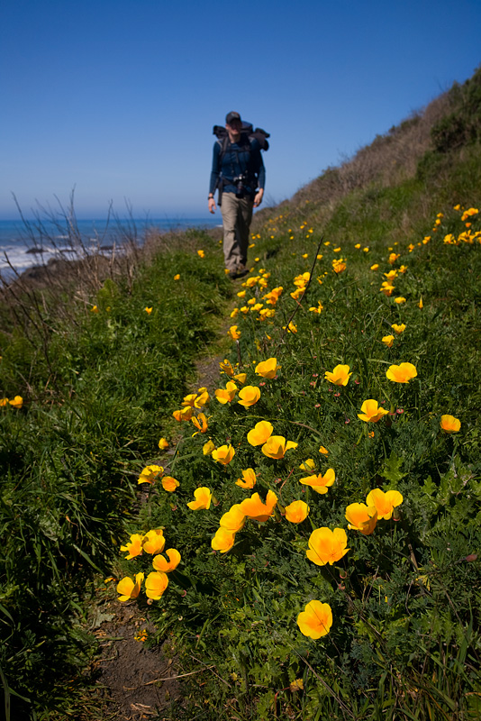Hiking Past Poppies by AlwaysJanuary (Randy)