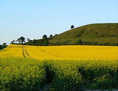 Yellow round the Beacon | by algo