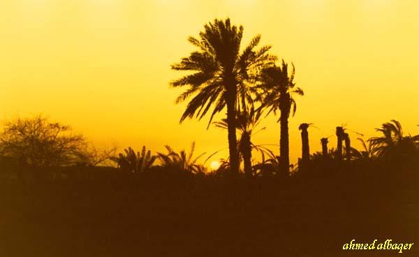 sunset among palm   غــروب بين النخيــل