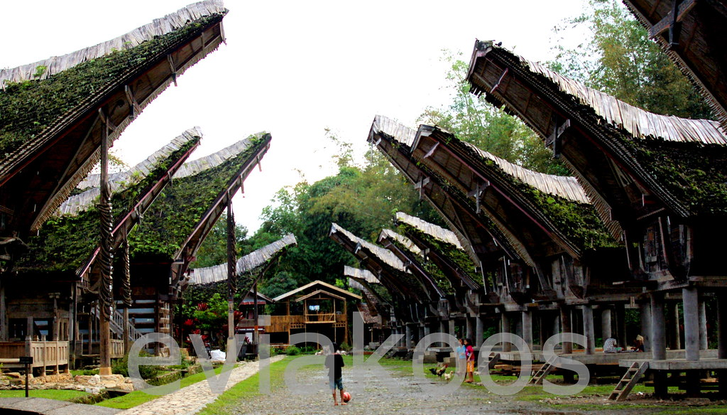 Tongkonan Rumah Adat Suku Toraja Evia N W Koos Flickr