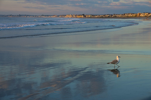ocean morning summer sunrise reflections gull maine newengland wells atlantic vacationland wellsbeach