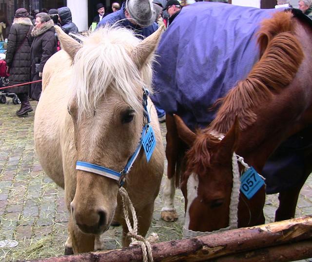 Leonberger-Pferdemarkt