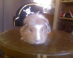 Pirate Pig | by Rochelle Hartman