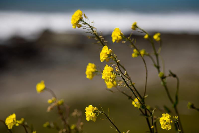 Lost Coast Flowers by AlwaysJanuary (Randy)